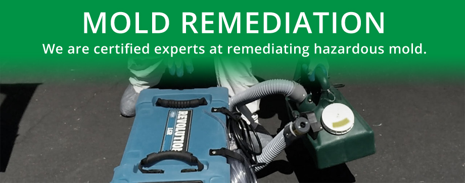 mold_remediation
