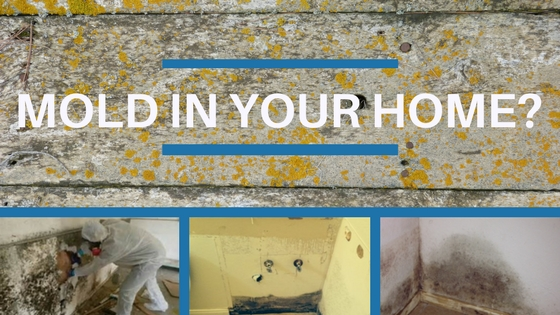 Is there mold in your home?