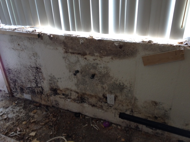 mold remediation, water damage
