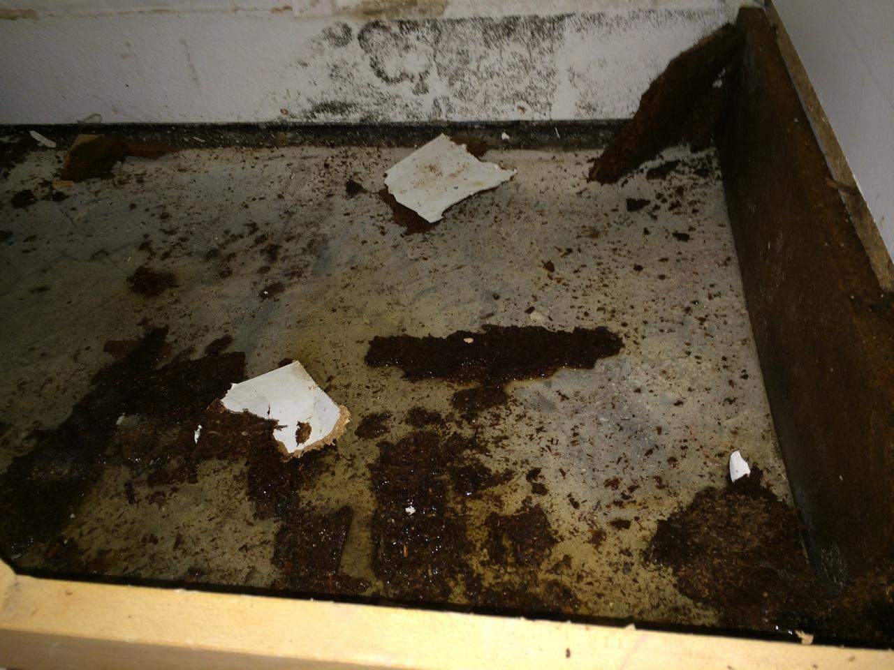 black mold, water damage