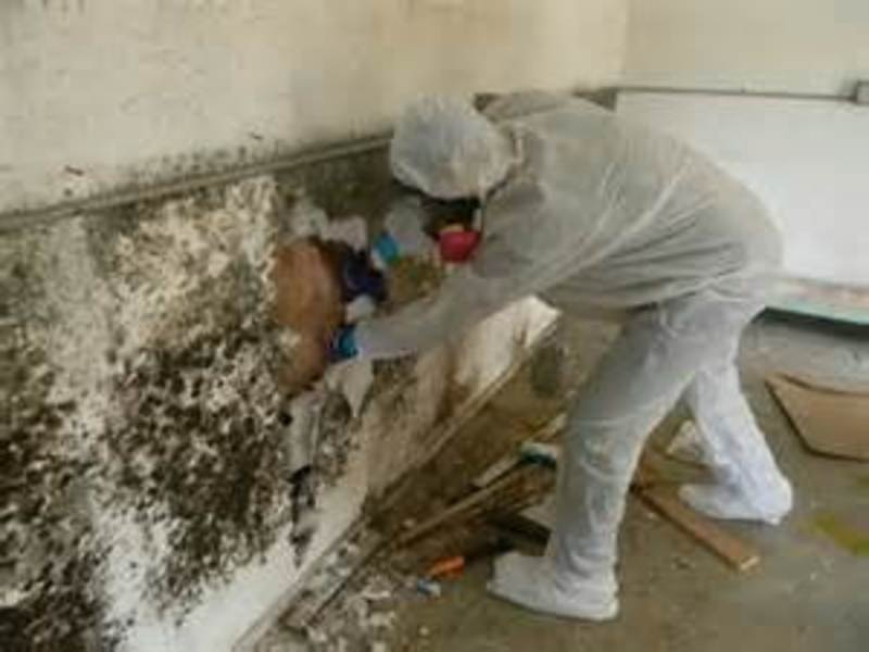 mold removal, mold repair