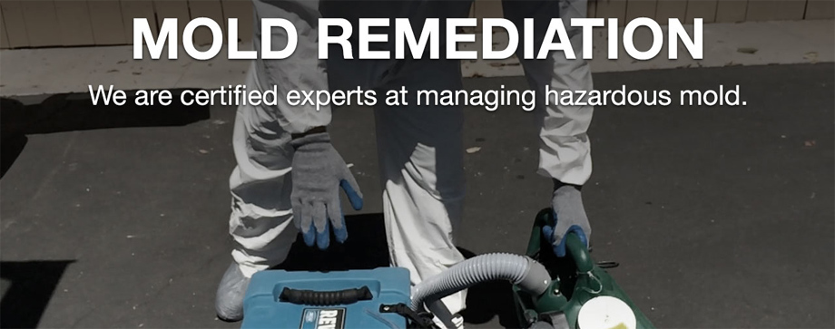 Mold remediation, mold removal