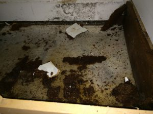 Black Mold Removal Oceanside CA