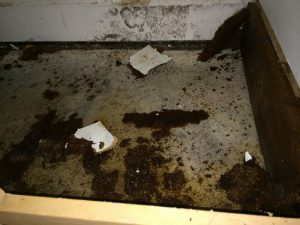 Black Mold Removal Solana Beach CA